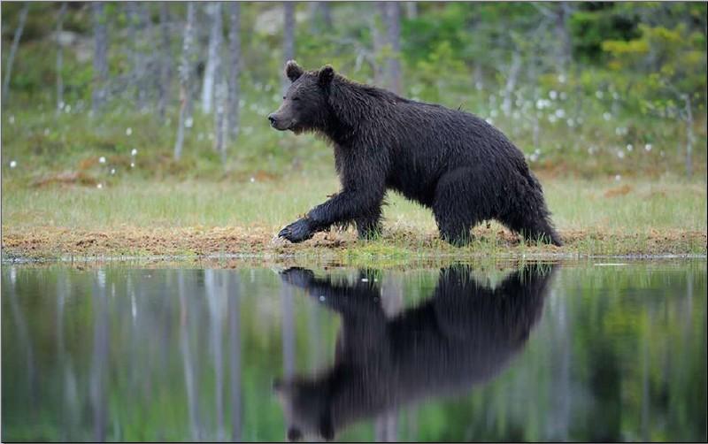 与野生动物灭绝的速度赛跑